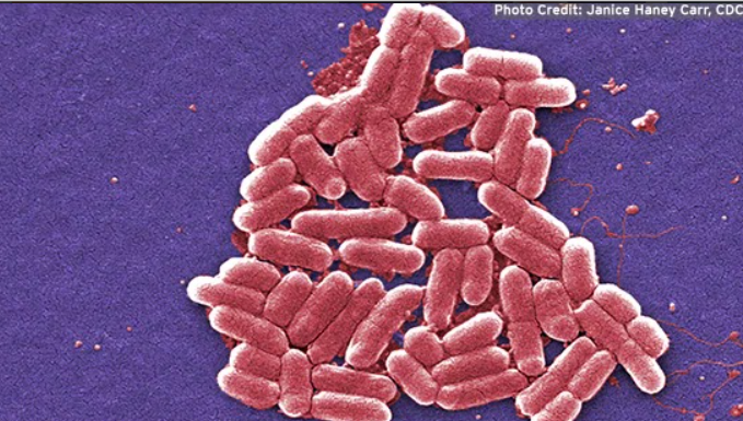 While everyone was focusing on COVID-19, E.coli made a comeback.